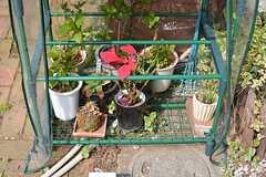 オーナーさんが育てている鉢植え。(2016-03-30,周辺環境,ENTRANCE,1F)