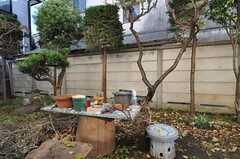 庭の様子2。(2011-12-13,共用部,OTHER,1F)