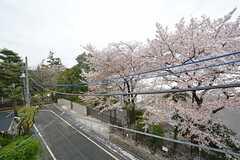 窓から見た外の景色。桜が咲いています。(301号室)(2015-04-04,専有部,ROOM,3F)
