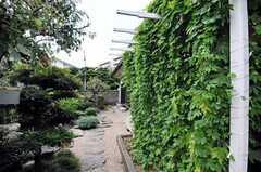 緑のカーテンの様子。(2010-08-25,共用部,OTHER,2F)