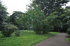 すみれ公園の様子。(2014-06-17,共用部,ENVIRONMENT,1F)