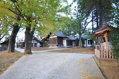 近所の神社はイチョウが綺麗です。(2014-11-18,共用部,ENVIRONMENT,1F)