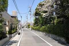 シェアハウス周辺の様子。桜の季節は花びらが舞います。(2011-04-14,共用部,ENVIRONMENT,1F)