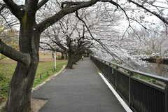 祖師谷公園の様子。遊歩道もあります。(2020-03-27,共用部,ENVIRONMENT,1F)