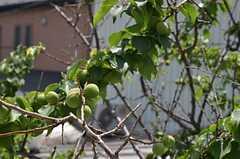 目の前には梅の木。(204号室)(2013-05-10,専有部,ROOM,2F)