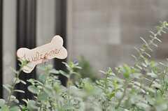 玄関には植物が飾られています。(2013-10-20,周辺環境,ENTRANCE,1F)