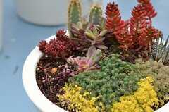 多肉植物も育っています。(2013-02-27,共用部,OTHER,8F)