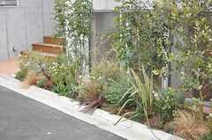 建物まわりには、グリーンが植えられています。(2013-02-21,共用部,OTHER,1F)