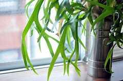 専有部内のグリーン。(301号室)(2011-05-12,専有部,ROOM,3F)