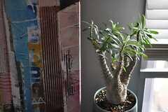 面白いカタチのグリーンも。アートは住人さんが飾ったものなのだとか。(2013-10-30,共用部,LIVINGROOM,6F)