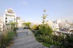 屋上の様子。かなり本格的な庭造りがされ、コミュニティガーデンと呼んでいるのだそう。(2013-10-30,共用部,OTHER,7F)