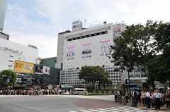 各線・渋谷駅の様子。(2011-09-27,共用部,ENVIRONMENT,1F)