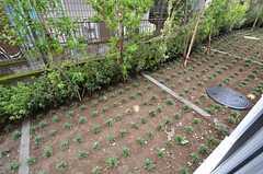 庭の様子。(109号室)(2015-08-20,専有部,ROOM,1F)