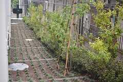 庭の様子。ゆるやかな傾斜です。(117号室)(2015-08-20,専有部,ROOM,1F)