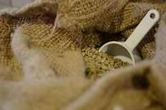 コーヒー豆はなんと生豆の状態で仕入れています。(2012-11-27,共用部,LIVINGROOM,1F)