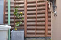 建物の前にはみかんが植わっています。(2019-12-24,周辺環境,ENTRANCE,1F)