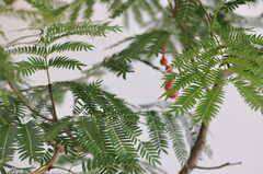 リビングのグリーン。(シトロン)(2011-09-16,共用部,LIVINGROOM,3F)
