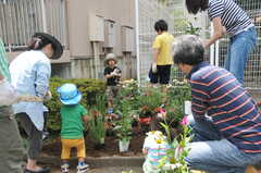 ガーデニングイベントの様子8。耕した土に花を仮置きします。(2013-06-30,共用部,PARTY,1F)