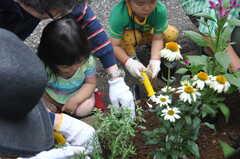 ガーデニングイベントの様子10。小さなお子さんも、手伝ってもらって一緒に埋めます。(2013-06-30,共用部,PARTY,1F)