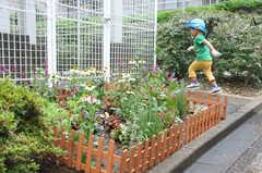 ガーデニングイベントの様子14。素敵な花壇ができあがりました。(2013-06-30,共用部,PARTY,1F)