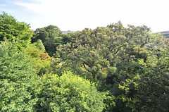 建物の裏は甘泉園公園。緑がとても豊かです。(2014-07-31,共用部,OTHER,5F)
