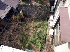 3Fから見たシェアハウスの庭。(2008-03-03,共用部,OTHER,2F)