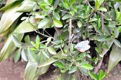 茂みには小鳥が潜んでいます。(2011-04-08,共用部,OTHER,1F)