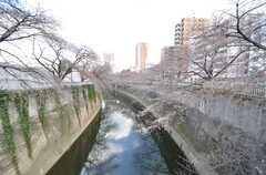 神田川までは徒歩2分。春には桜が綺麗に咲きます。(2016-03-25,共用部,ENVIRONMENT,1F)