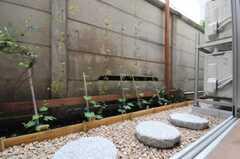 庭の様子。ゴーヤが植えてあるそう。(2010-05-28,共用部,LIVINGROOM,1F)