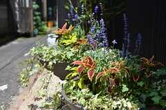 玄関脇にはグリーンが育っています。(2012-07-04,共用部,ENVIRONMENT,1F)