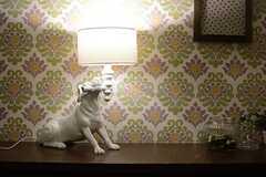 犬のランプが置かれています。(2015-08-31,周辺環境,ENTRANCE,5F)