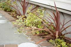 植え込みの植物はスタイリッシュな雰囲気。(2017-10-25,共用部,GARAGE,1F)