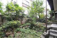 庭の様子2。茂っています。(2013-10-17,共用部,OTHER,1F)