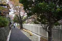 シェアハウス周辺の遊歩道。緑が多いエリアです。(2014-11-12,共用部,ENVIRONMENT,1F)