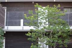 2Fが届きそうな背の高い木も。(2013-12-13,共用部,OTHER,1F)