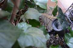 木の根元には照明が設置されています。(2013-12-13,共用部,OTHER,1F)