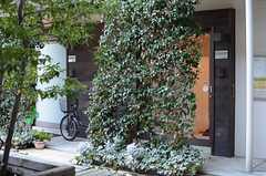 グリーンウォールの裏が、共用ラウンジの入り口です。(2013-12-13,共用部,OTHER,1F)