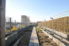 菜園スペースの様子。(2013-12-13,共用部,OTHER,3F)