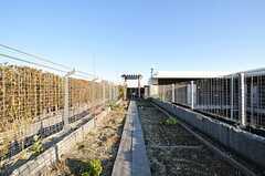 菜園スペースの様子2。(2013-12-13,共用部,OTHER,3F)