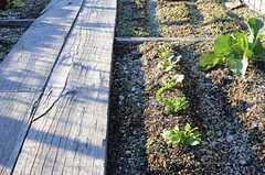 菜園は使用できる枠が区切られています。(2013-12-13,共用部,OTHER,3F)