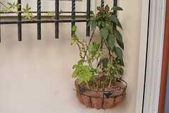 植物はオーナーさんが手入れをしてくれます。(2015-08-11,共用部,OTHER,1F)