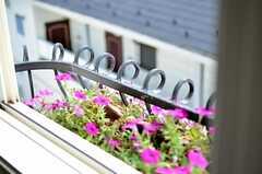 オーナーさんが季節ごとに、窓の外の花を植えてくれています。(302号室)(2015-08-11,専有部,ROOM,3F)