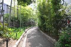 竹林の散歩も気持ちよさそうです。(2012-05-21,共用部,ENVIRONMENT,1F)