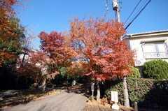 高円寺参道。(2008-12-15,共用部,ENVIRONMENT,1F)