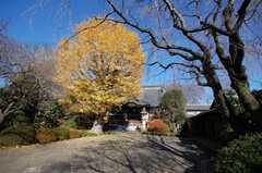 紅葉が見ごろの高円寺。(2008-12-15,共用部,ENVIRONMENT,1F)