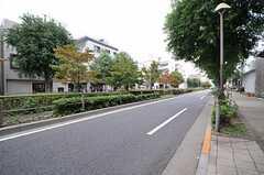 西武新宿線・井荻駅からシェアハウスへ向かう道の様子。大通りにはたくさん植物が植えられています。(2013-10-01,共用部,ENVIRONMENT,1F)