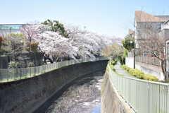 シェアハウス周辺の様子2。神田川が流れています。(2018-03-30,共用部,ENVIRONMENT,1F)