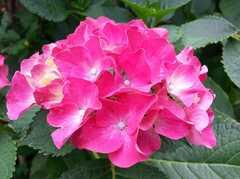 庭のお花の様子。 ※事業者様提供素材(2014-06-07,共用部,OTHER,1F)