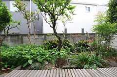 専有部の様子。庭付きです。(105号室)(2011-07-26,専有部,ROOM,1F)