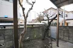 桜の木もあり、春にはプチお花見ができそう。(2012-03-16,共用部,OTHER,1F)